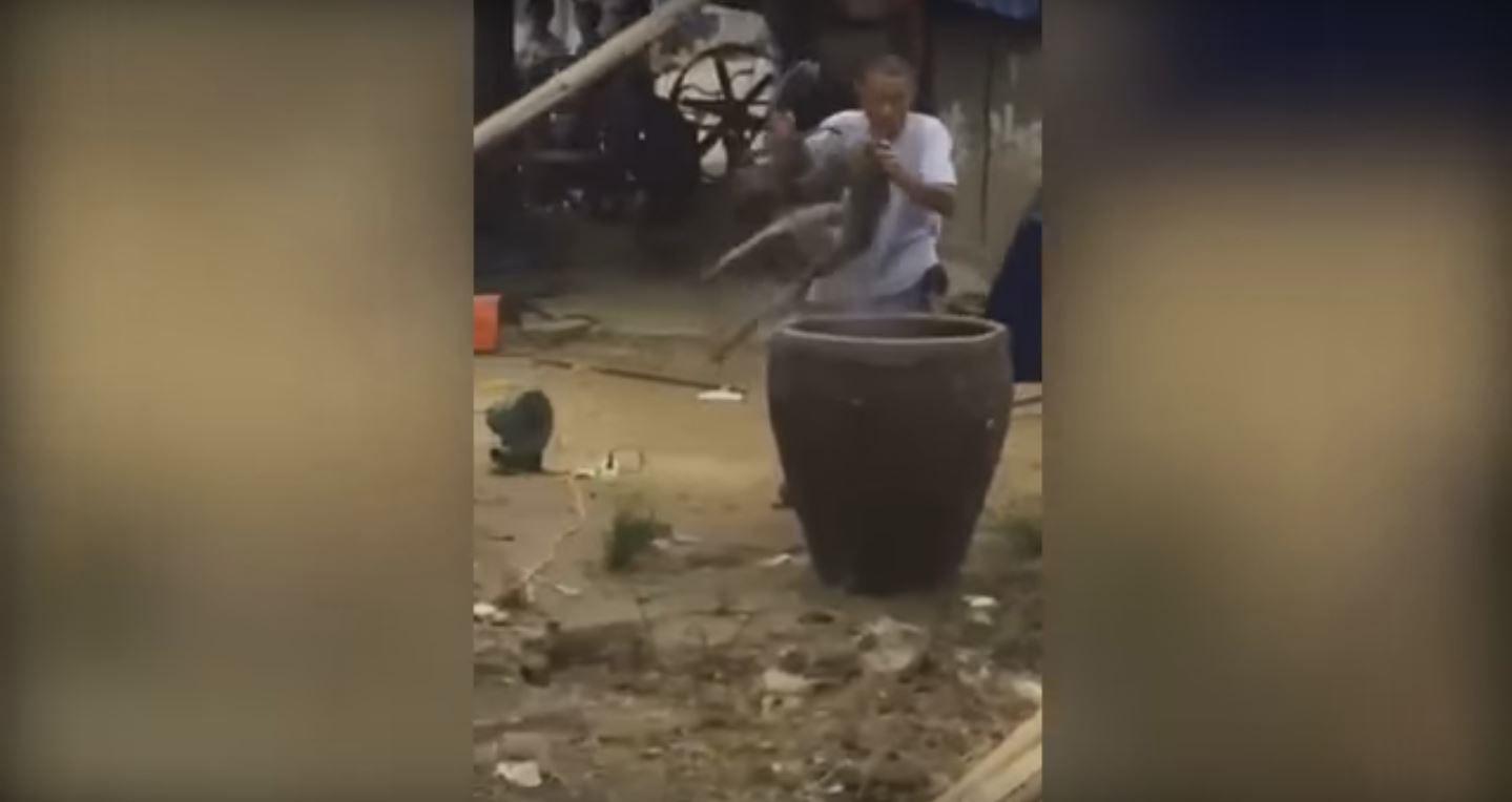 VIDEO: Hierven un perro vivo en China para vender su carne