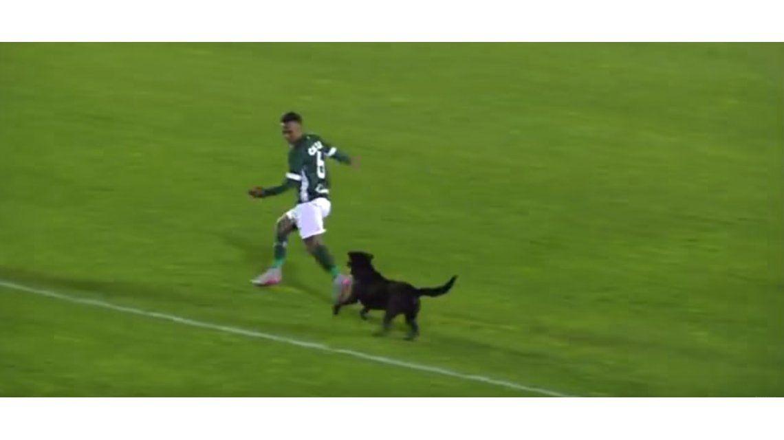 VIDEO: futbolista quiso atrapar a un perro, pero terminó corriendo