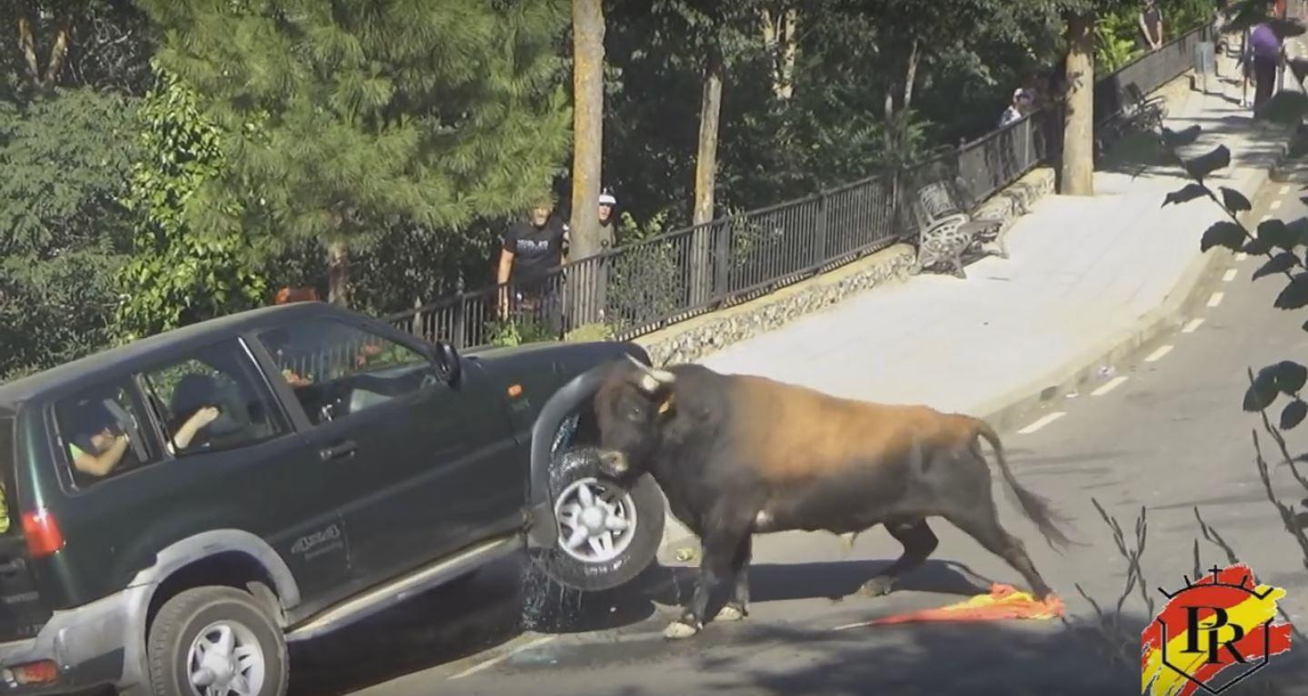 VIDEO: Mirá a un toro enojado destrozar una camioneta con gente adentro