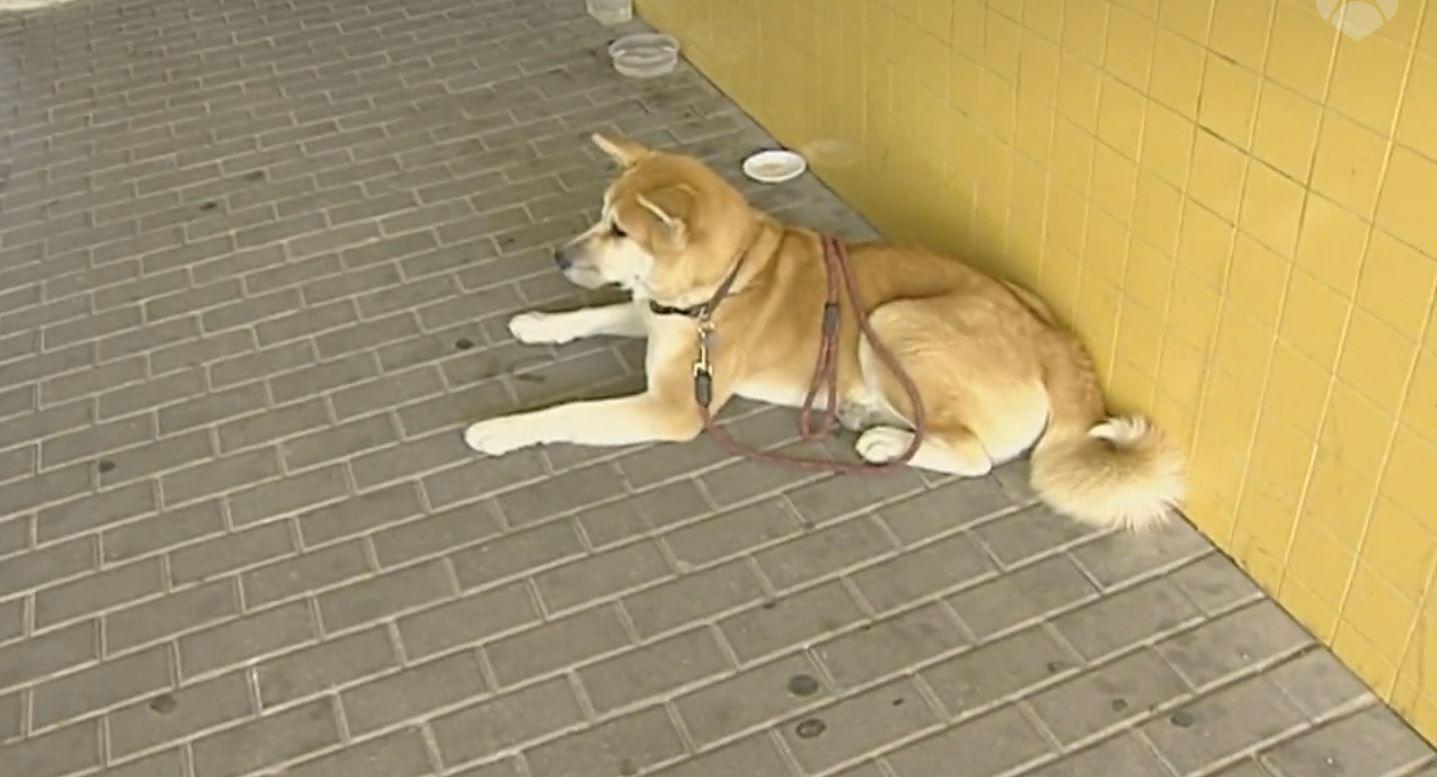 Alicante: una perra espera a su dueña en la puerta del hospital