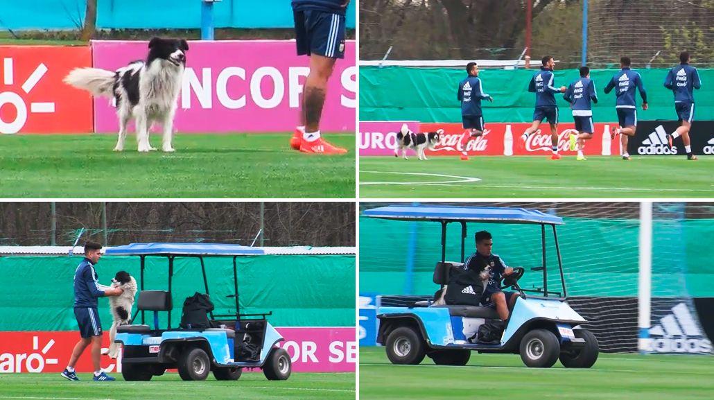 El refuerzo de último momento: un perro entrenó con la Selección de Bauza