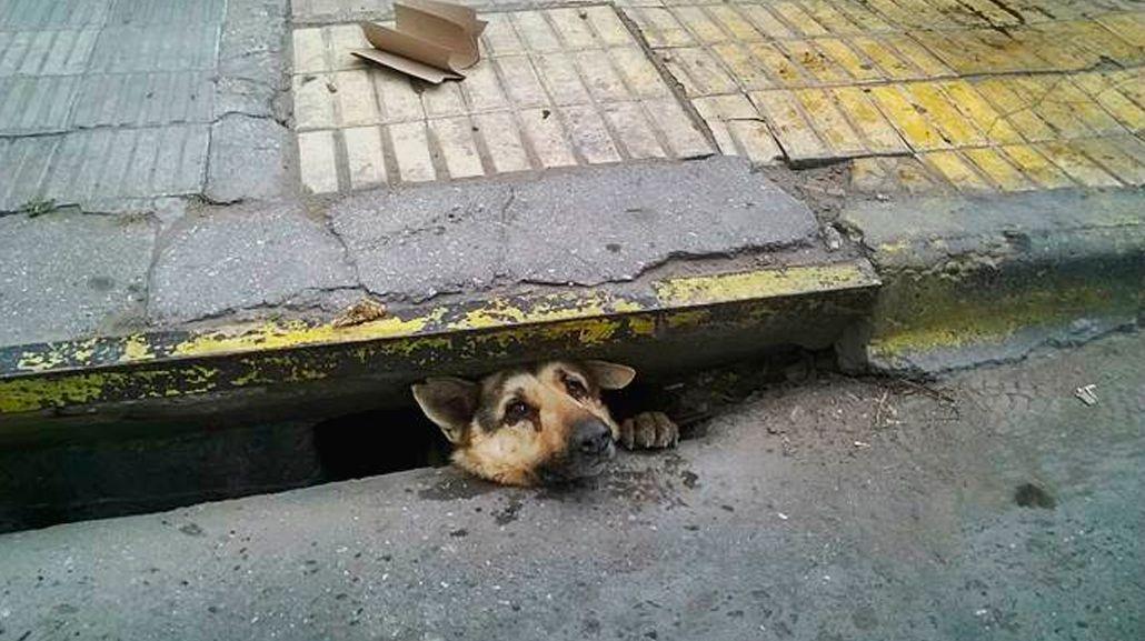 VIDEO: El emotivo rescate de un perro atrapado en una alcantarilla