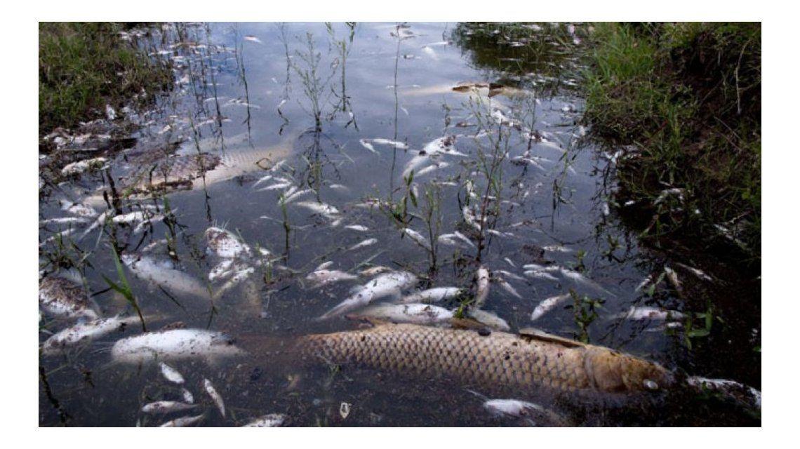 Preocupa en Córdoba la misteriosa muerte de peces en Calamuchita