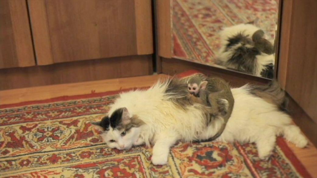 Juntos a la par: la gata que adoptó a un mono rechazado por su madre