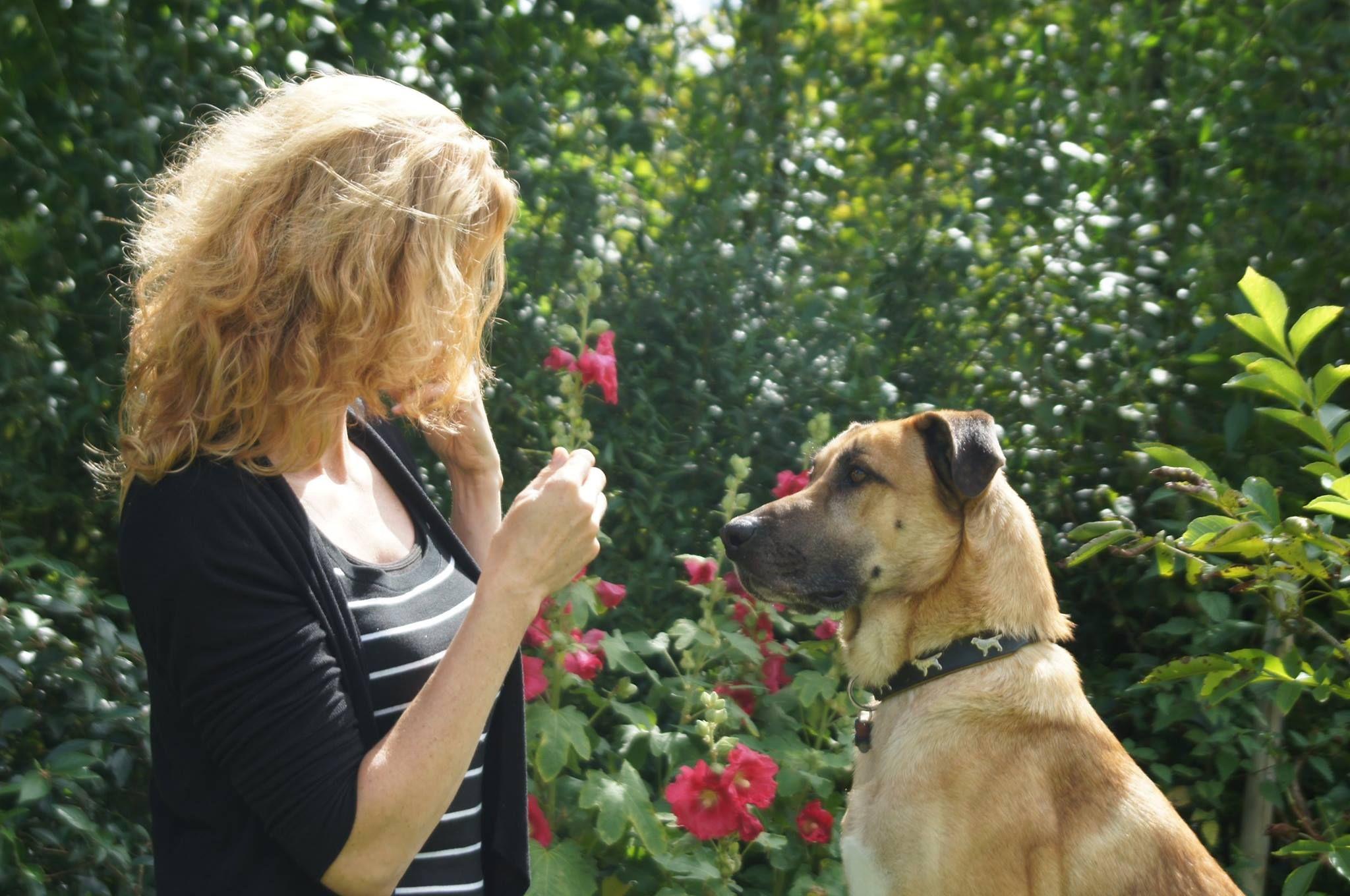 La nueva vida de Rubio, el perro callejero que fue adoptado por una azafata alemana