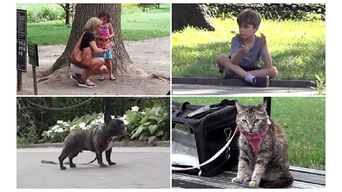 ¿A quién rescatarías primero: una nena, un nene, un perro o un gato? Mirá el experimento social