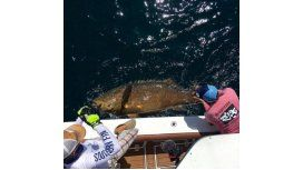 VIDEO: Mirá a un jugador de la NBA atrapar un pez Goliath de 180kg