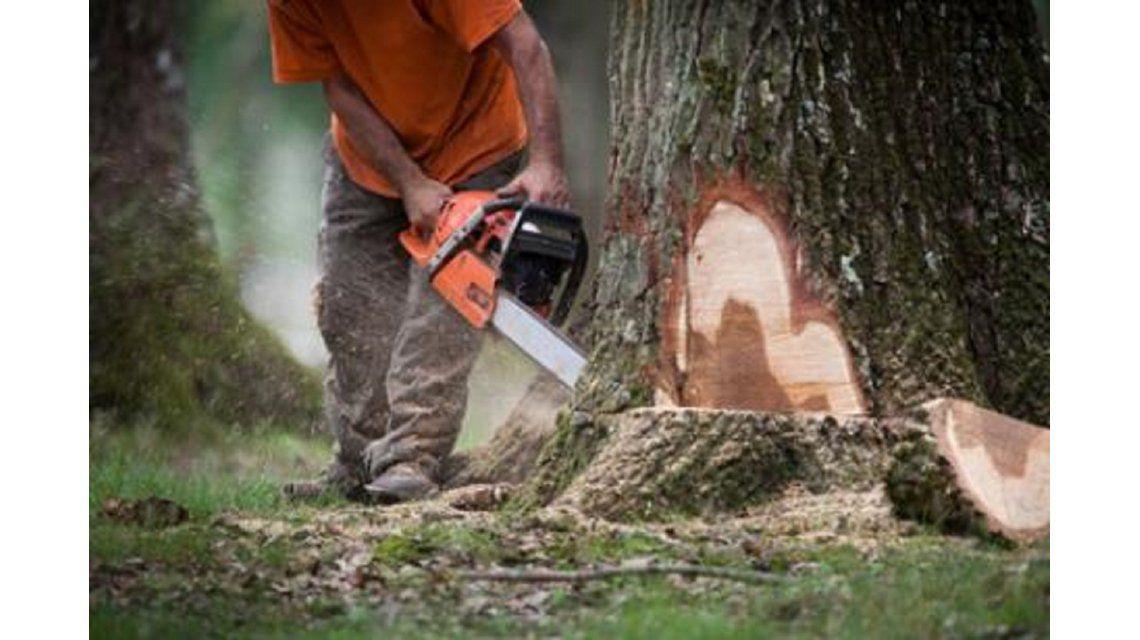 Enfurecido, un hombre cortó el árbol de un vecino, pero este cayó sobre su casa