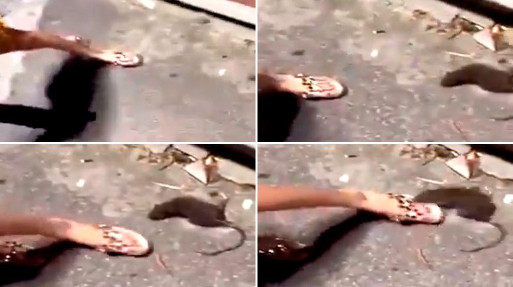 Impactante: intentó patear una rata moribunda y recibió una brutal mordida