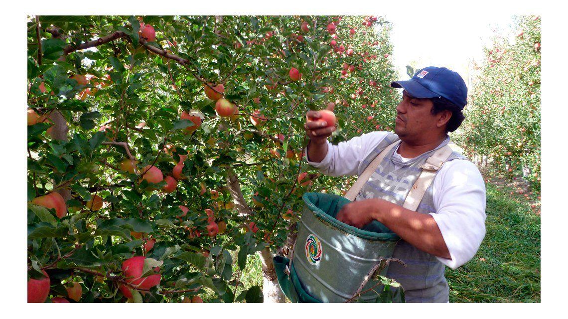 Productores regalarán este martes 10 mil kilos de fruta en Plaza de Mayo