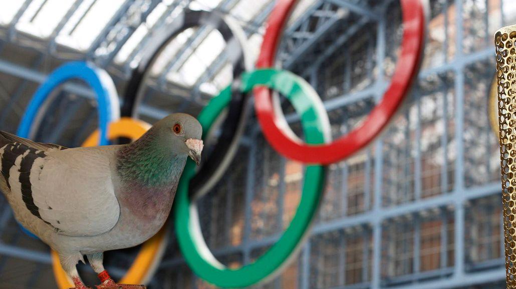 Sin Juegos: la Argentina no competiría en las olimpíadas de palomas
