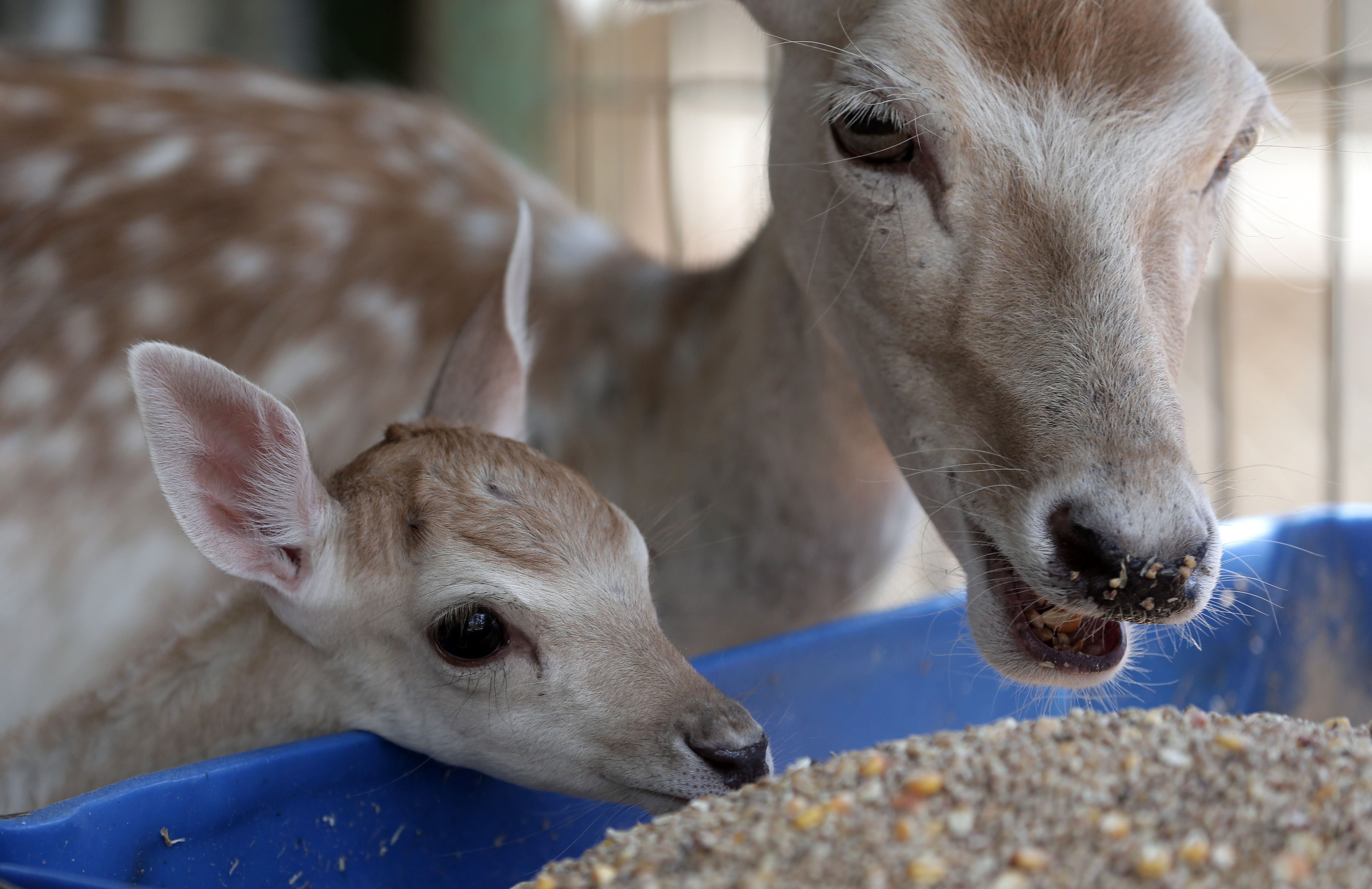 Rescatan a los últimos animales que habitaban el zoológico de Gaza