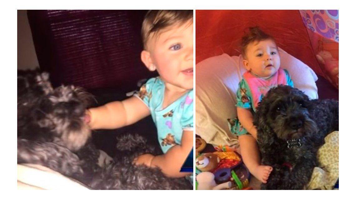 Polo, el perro héroe que salvó a una beba en un incendio