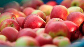 ¿Cuántas tartas se pueden hacer con las manzanas regaladas en la plaza?