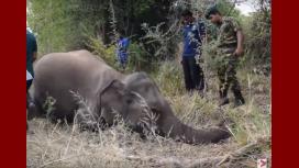 Tren mató a cuatro elefantes en Sri Lanka