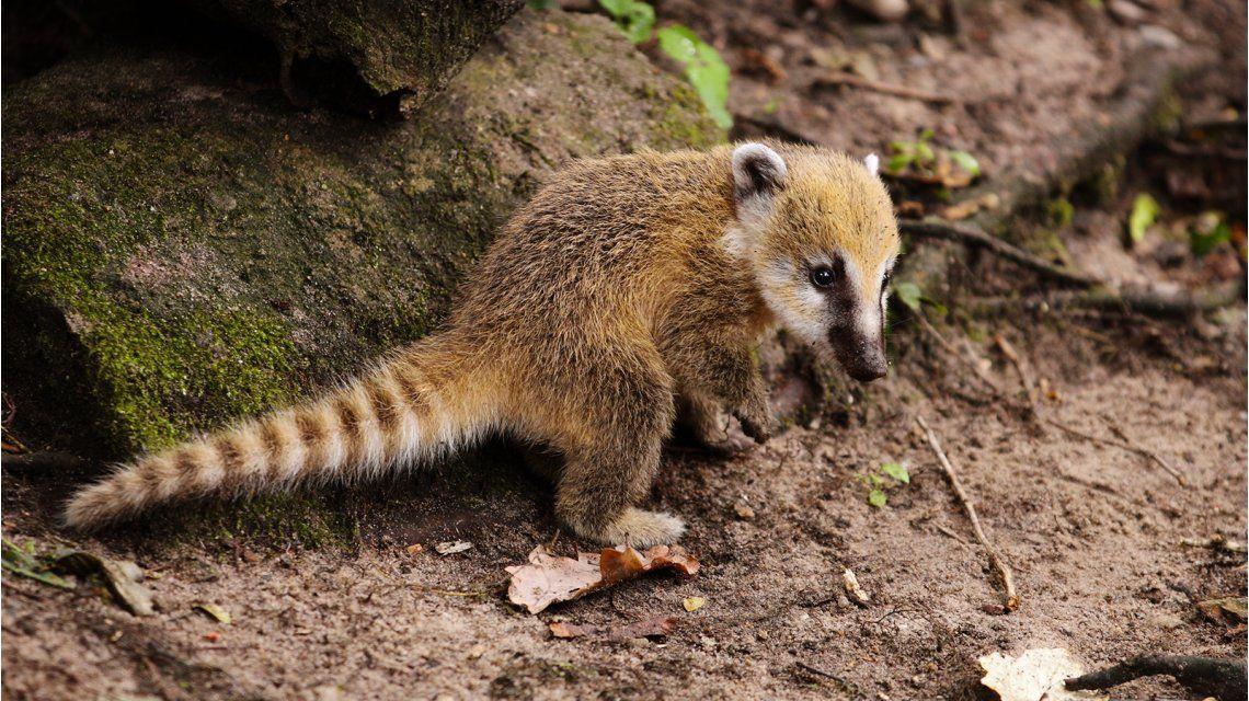 Más de 30 animales del ex Zoo de la Ciudad irán a un refugio en Misiones