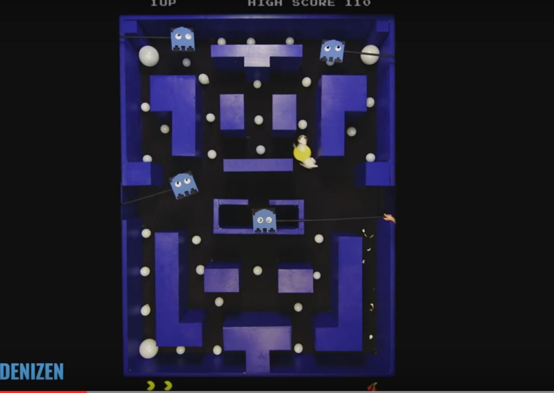 VIDEO: Un perro juega al Pac-Man mejor que cualquiera