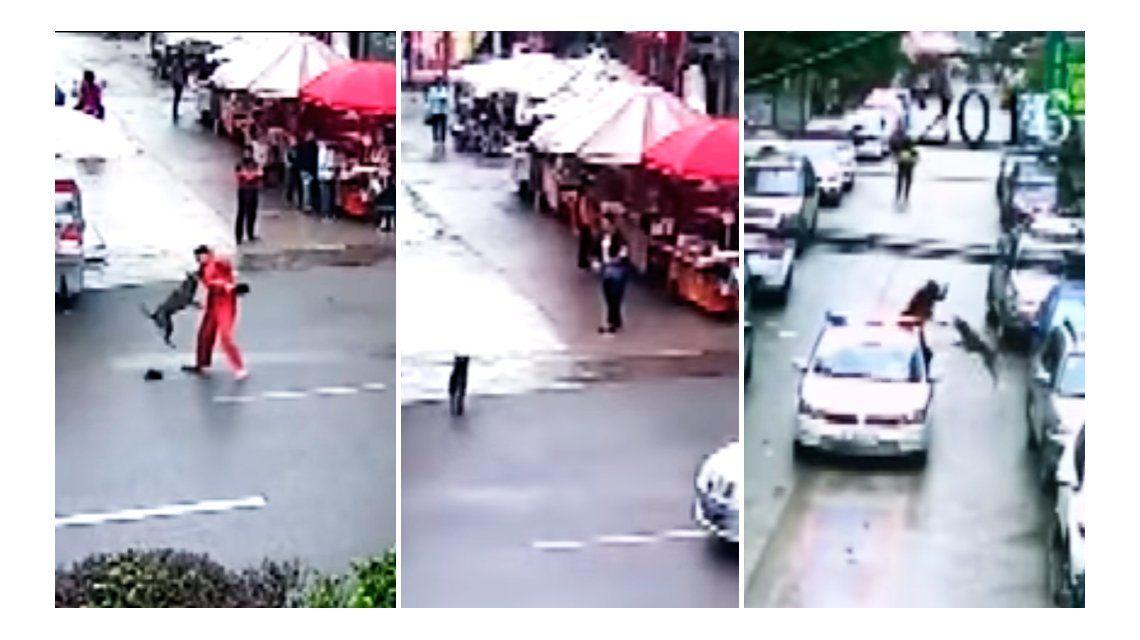 VIDEO: Un perro furioso atacó a 23 personas en un centro comercial chino
