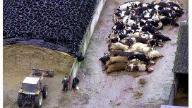Argentinos eliminan el gen de la vaca loca