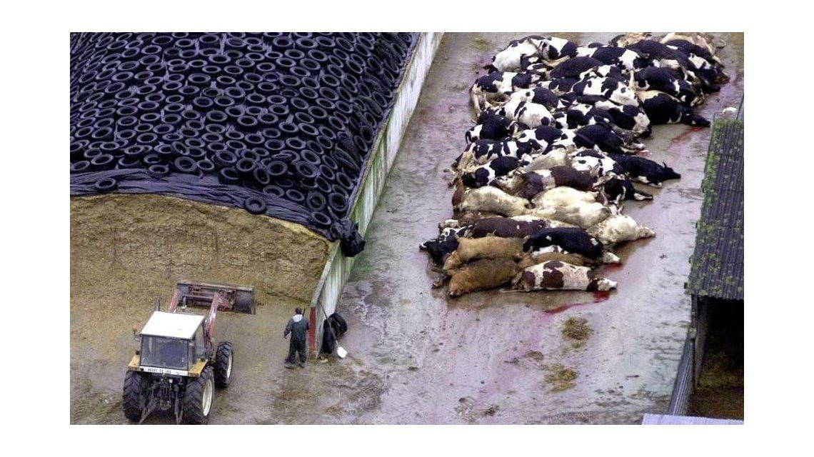 Con sello nacional: un grupo de científicos argentinos eliminó el gen de la vaca loca