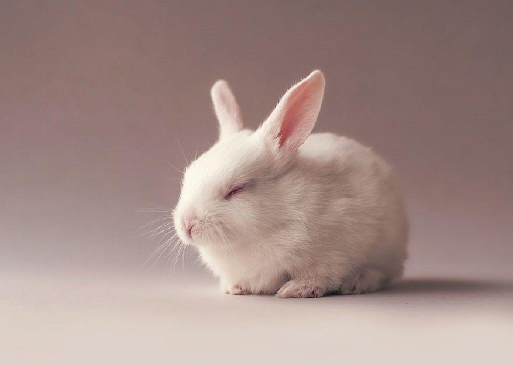 Mirá las increíbles y tiernas fotos de un conejo recién nacido