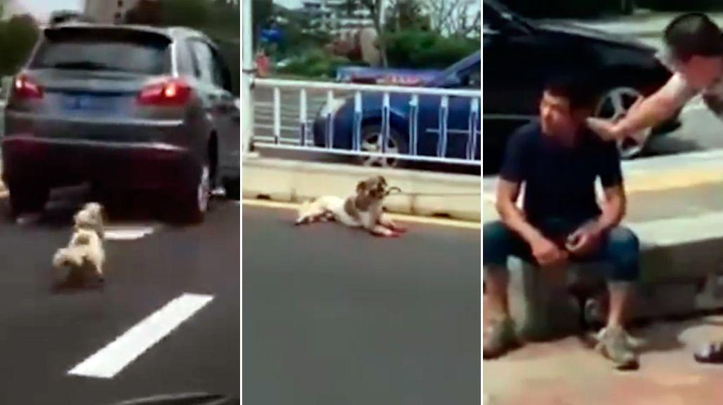 Horror en plena calle: ató a su perro a una camioneta y lo arrastró hasta matarlo