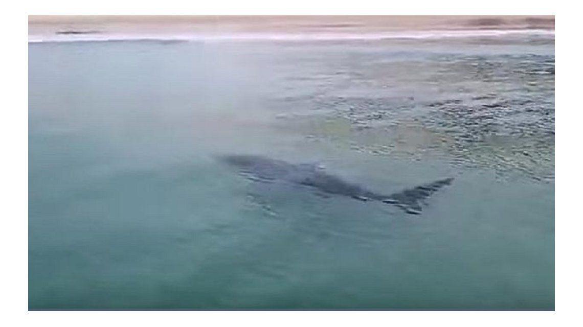 Cierran una playa en España por el ataque de un tiburón