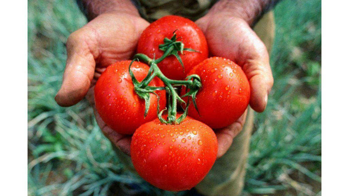 Fin del misterio: por qué el tomate perdió su gusto original