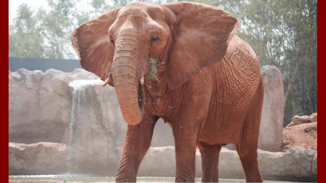 Marruecos: un elefante tiró una piedra y mató a una nena de 7 años