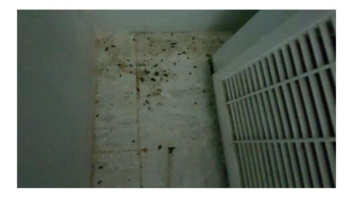 Denuncian que un restaurante está invadido por ratas y sigue en funcionamiento