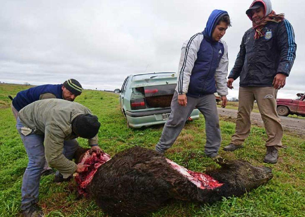 Volcó un camión jaula y los vecinos carnearon a los animales en plena ruta