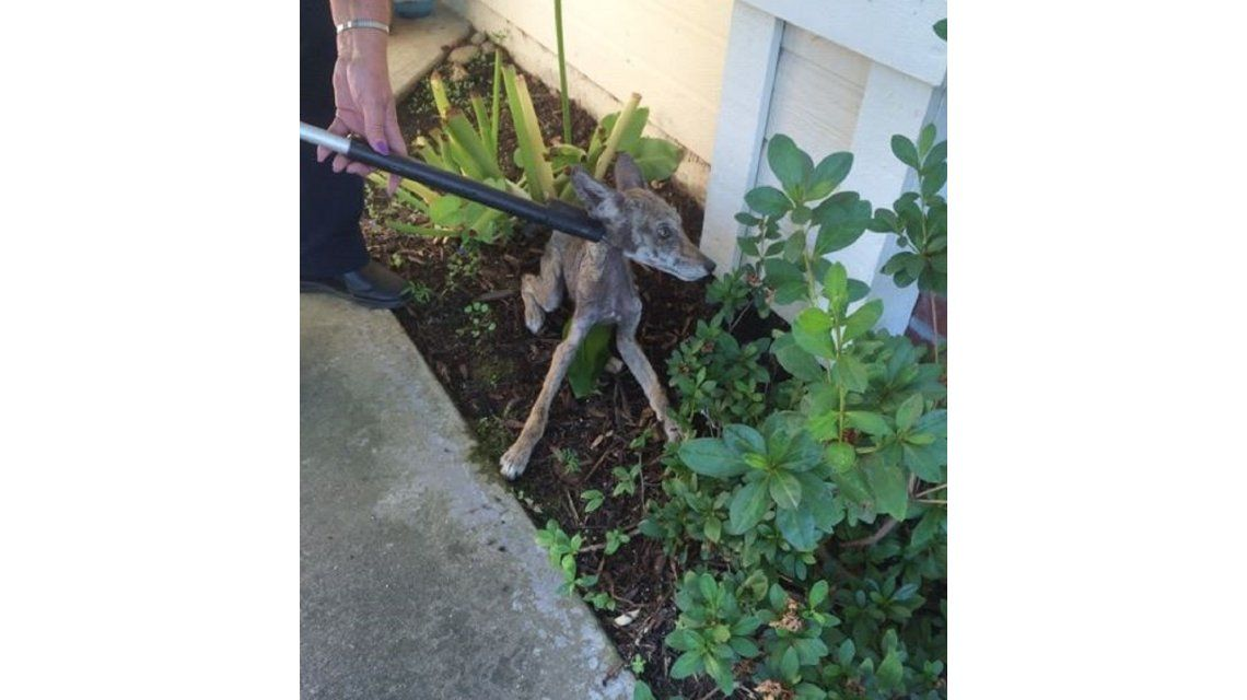 Creyó haber rescatado una perrita, pero se llevó una gran sorpresa