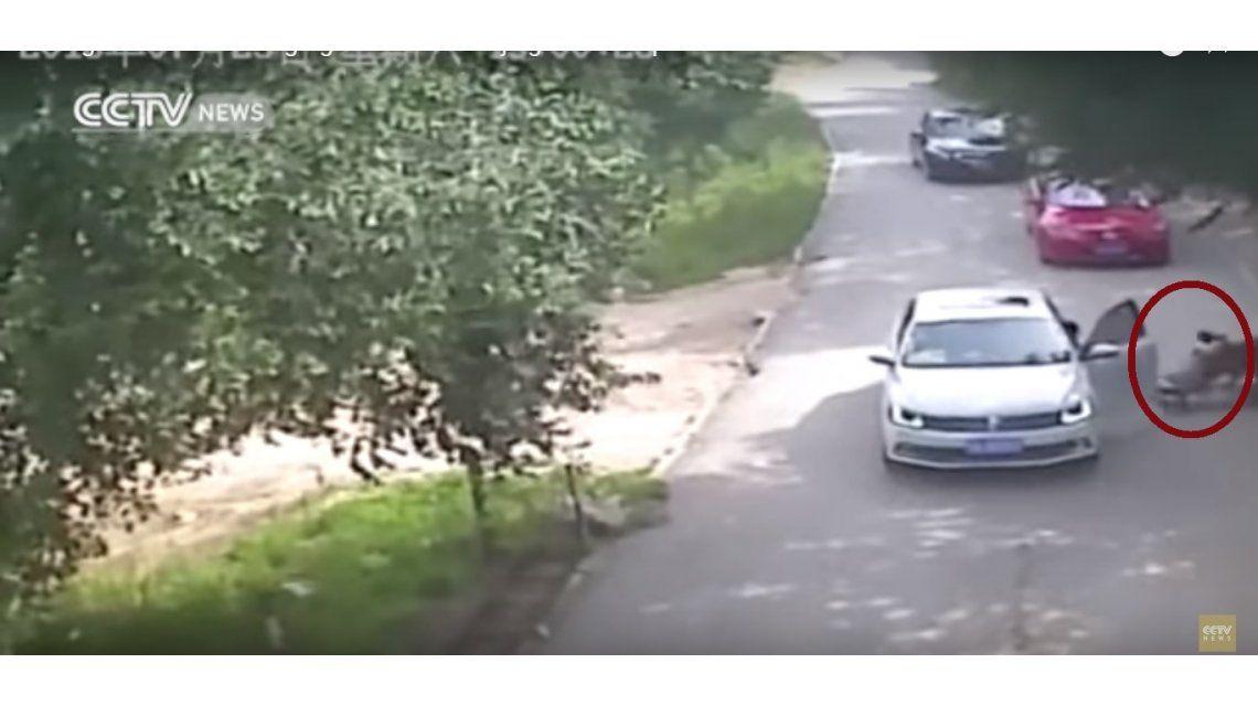 VIDEO: Difunden imágenes del ataque mortal de un tigre en un zoológico de China