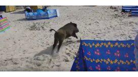 VIDEO: Jabalí salvaje atacó a los turistas en una playa de Polonia