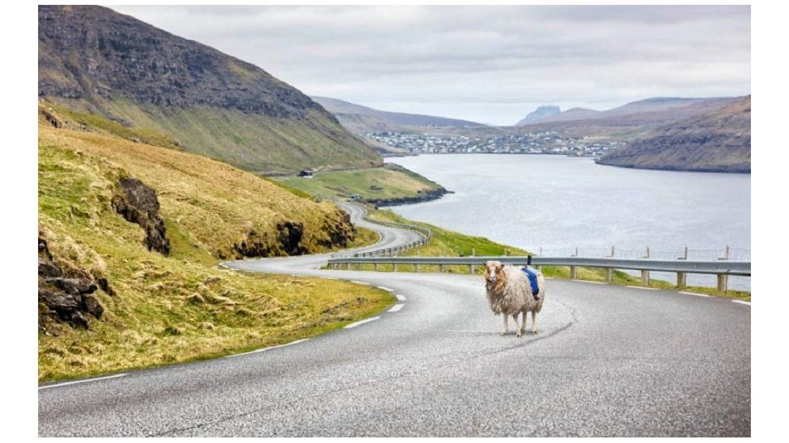 Una oveja filma los imponentes paisajes de las Islas Faroe en 360°