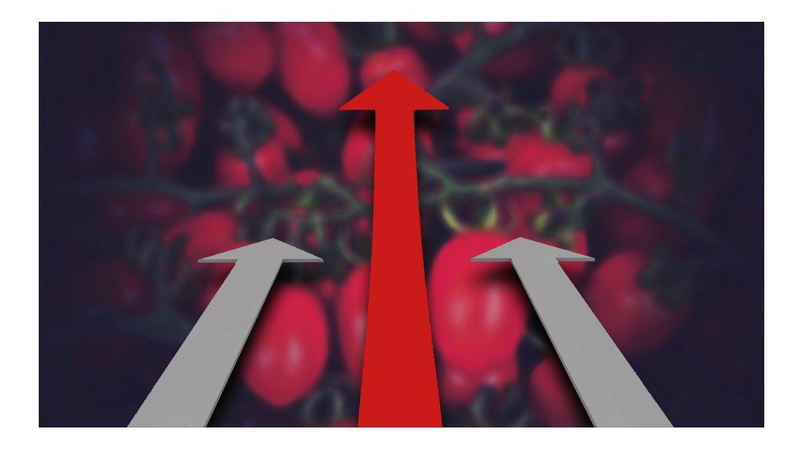 El tomate perita aumentó un 157% en lo que va del año