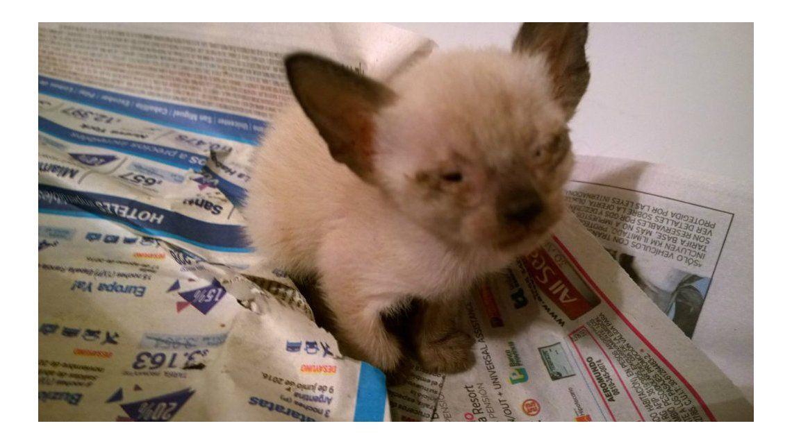 Así se recuperan los gatitos rescatados de un departamento de Almagro