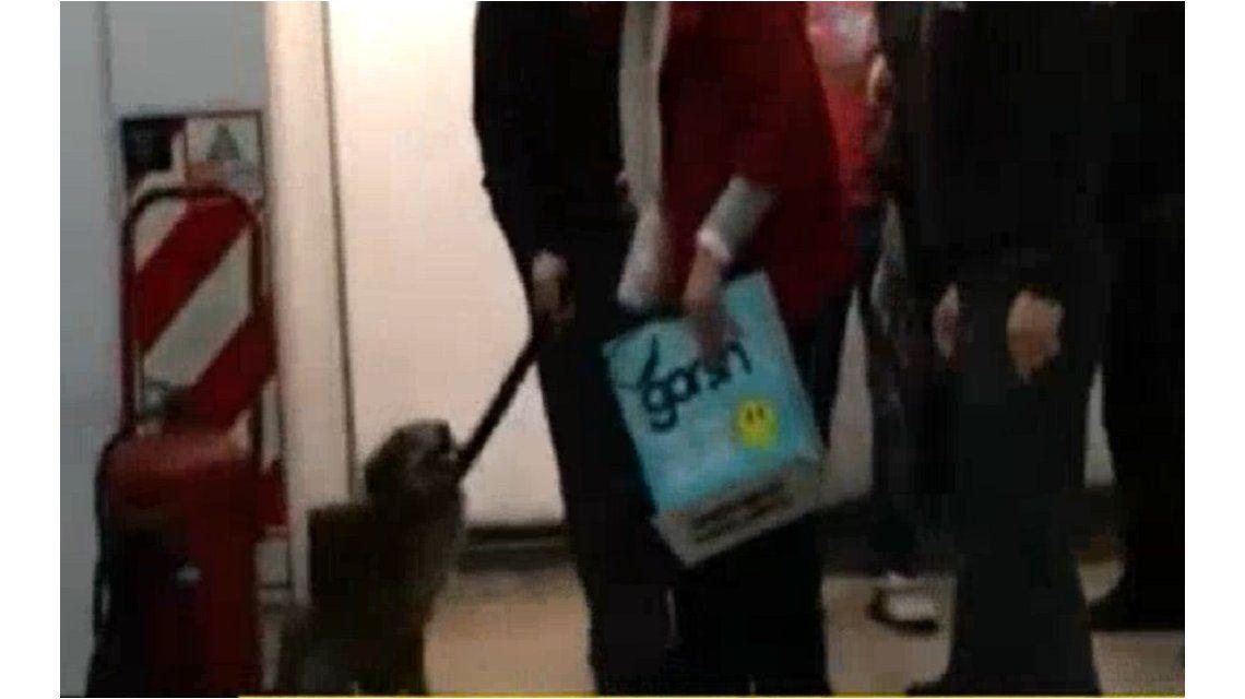 Un perro, el culpable de la demora de la Línea D de subtes