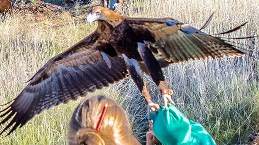 El impactante momento en que un águila trata de llevarse a un nene