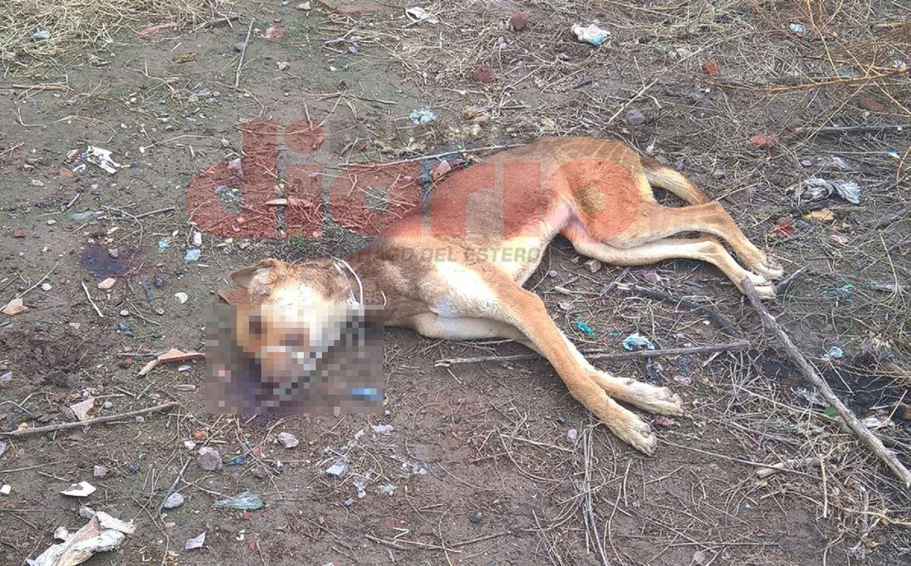 Ahorcaron a un perro y lo golpearon hasta matarlo