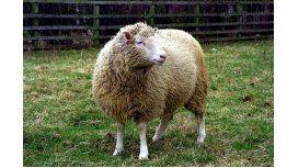 A 20 años de Dolly, ya se come carne clonada