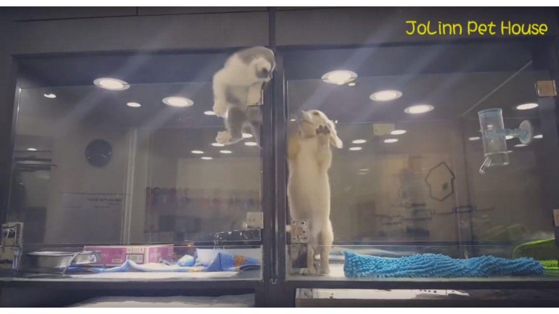 VIDEO: Un gato escapó de su jaula para visitar a un perro