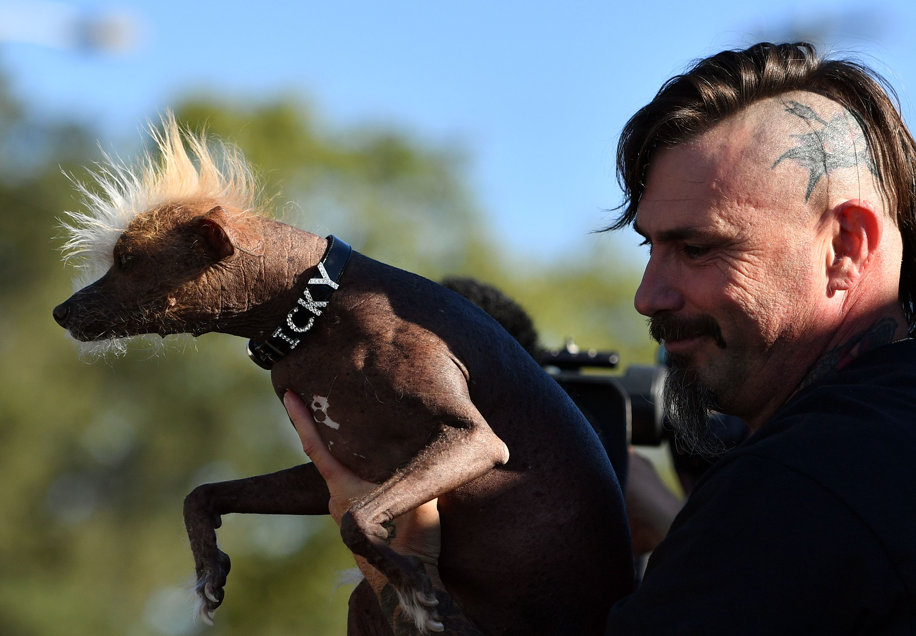 Un crestado chino se coronó como el perro más feo del mundo