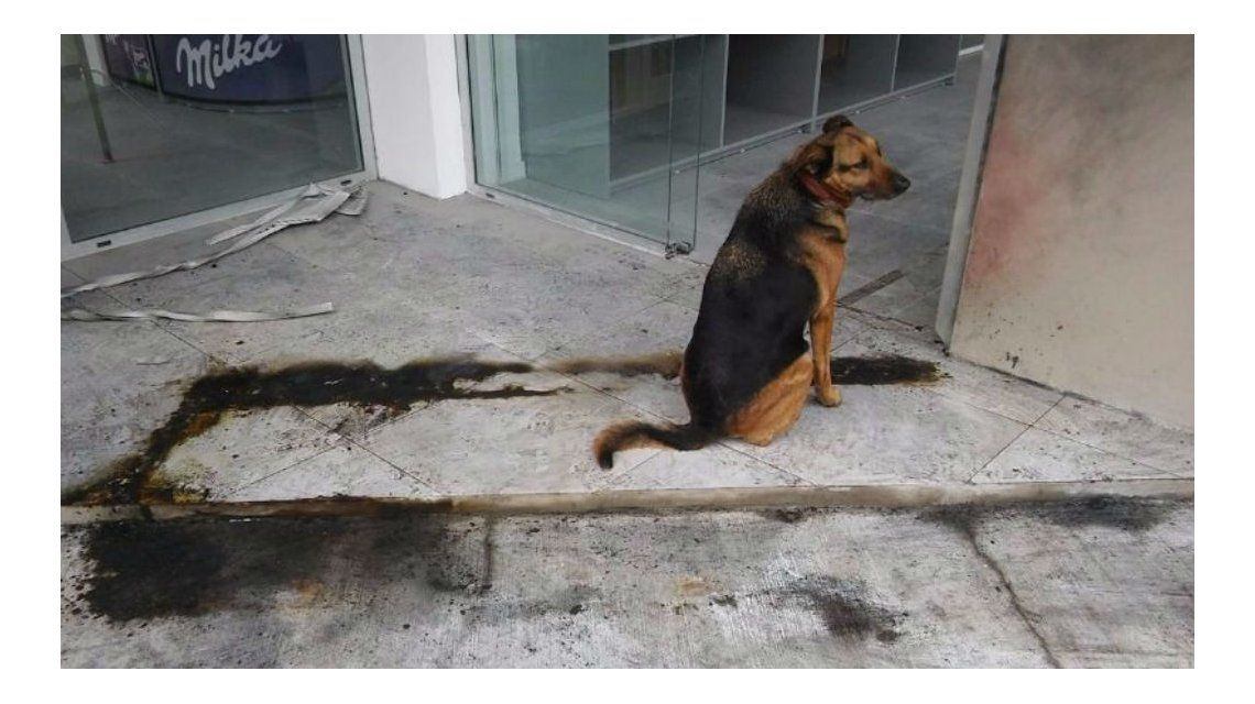 Vivía en la calle y un vecino enfurecido le quemó el colchón donde dormía