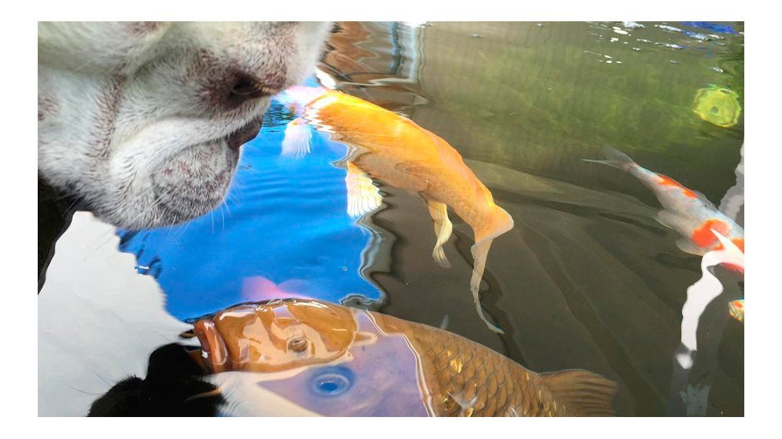 VIDEO: la tierna amistad entre un perro y un pez
