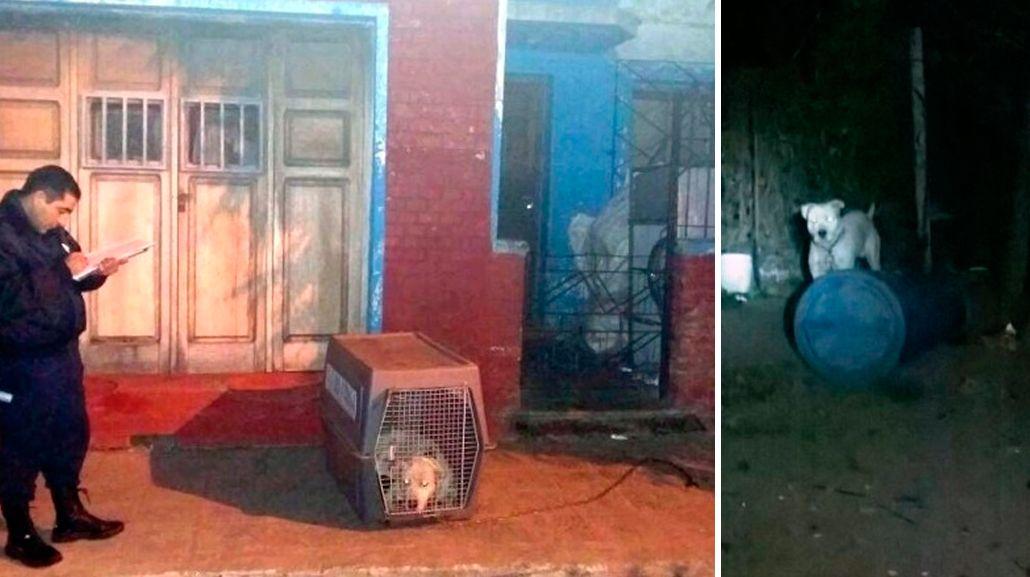 Ahora en San Luis: un dogo mató a un nene de un año