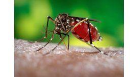 Confirman 40 casos de zika en el norte de Chaco