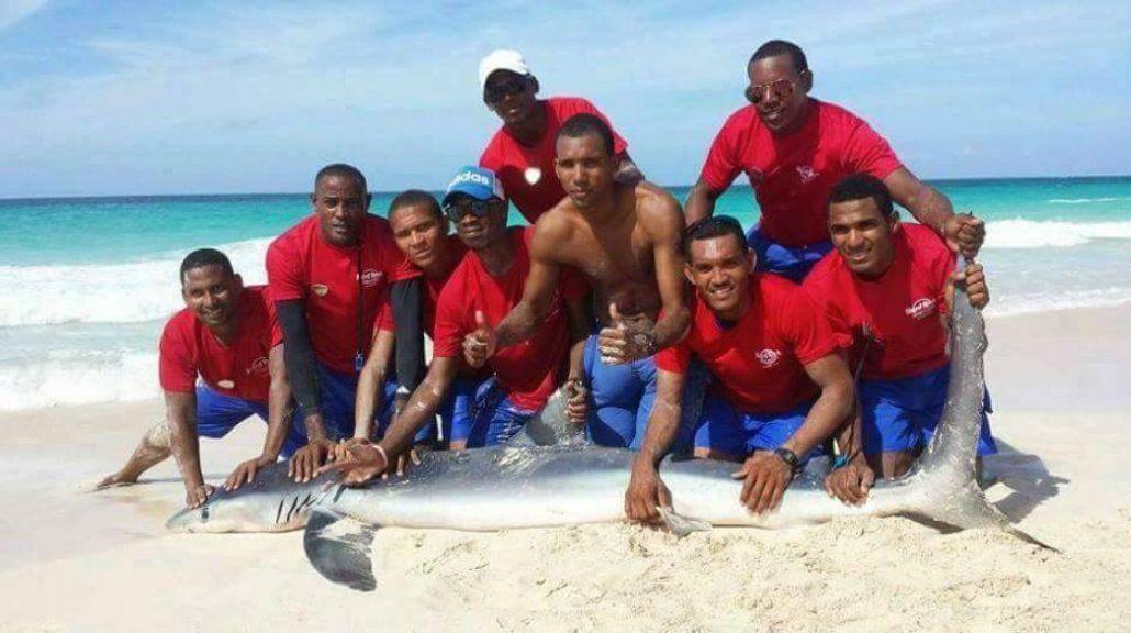 Como el delfín de Santa Teresita: sacaron un tiburón para sacarse selfies