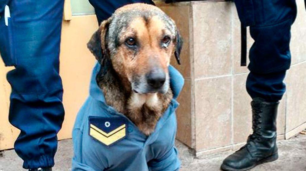 Éste es el verdadero perro policía de Córdoba