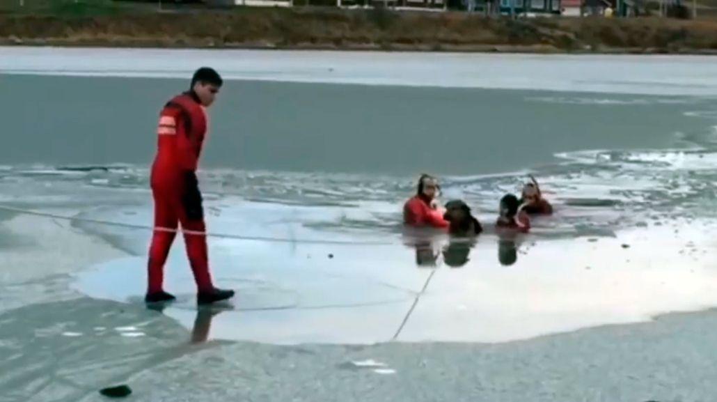 El increíble rescate de dos perros que cayeron en aguas congeladas